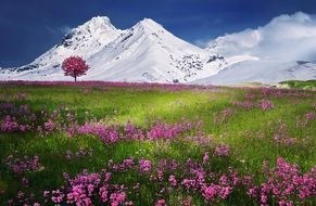 A flower clearing in the background of snow-capped mountains