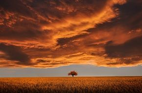 A lonely tree against the background of an incredible fiery landscape