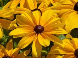 yellow echinacea flower