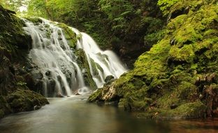 waterfall among green forest
