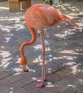 pink flamingo in a zoo
