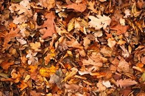 brown fallen leaves in the forest