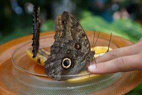 Big grey butterfly on fingers