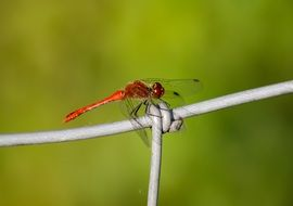 red dragonfly on the trellis