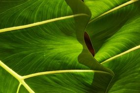 closeup of green tropical leaves