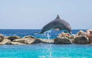 playful dolphin in the sea