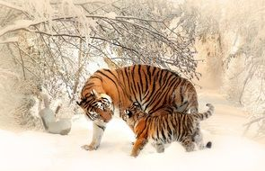 tiger with tiger baby