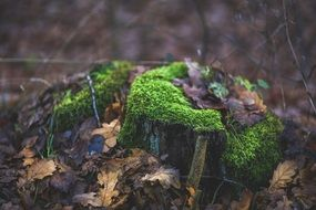 green moss on a tree stump
