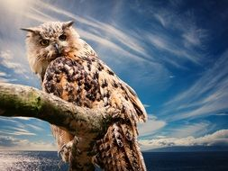 Beautiful and colorful owl under the clouds