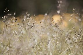field grasses meadow macro photo