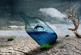bottle with a dolphin in the desert art