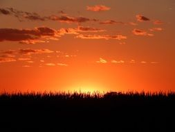 red sunset horizon with corn landscape