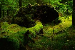 Green mystic forest moss norway