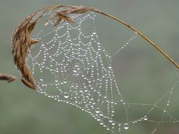 spider web with drops of water on a dry sheet