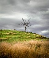 dead tree on hill at grey clouds