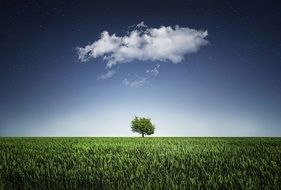 white cloud over a lone tree on a green meadow