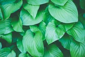 green elongated leaves
