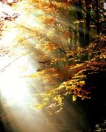 Bright sun rays in the colorful forest