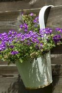 Flower pot with purple flowers
