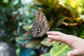 butterfly sits on a hand