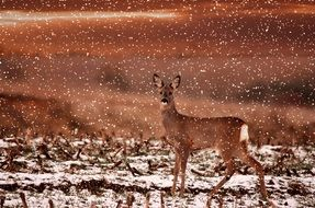 roe deer in a field among snow