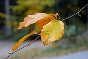 yellow leaves on a thin branch