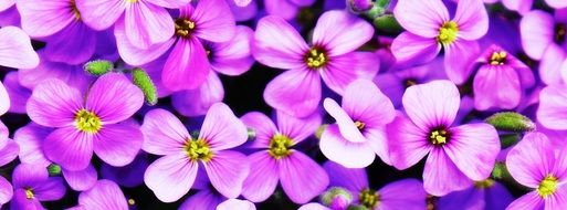 beautiful and delightful purple flowers