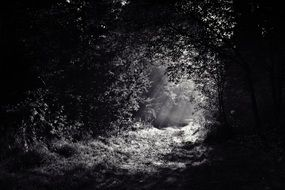 creepy dark path in the forest