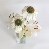 white lilies and coneflowers in vase