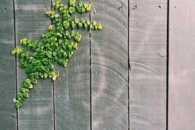 green plant on a wooden fence