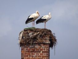 Storks on the house