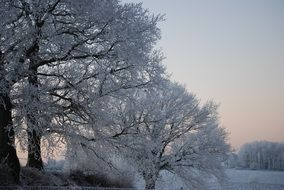 a winter landscape of trees in snow