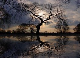 reflection of a tree in a lake at sunset