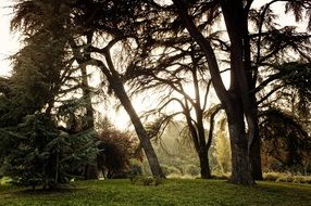 old trees in park, italy, milan