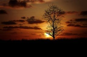 lonely tree in the meadow against a golden sunset