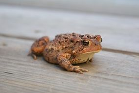 picture of the toad
