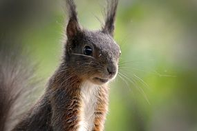 delightful squirrel