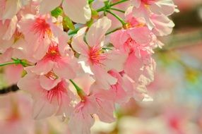 pink flowers on a tree in spring