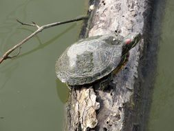 turtle on a log in the water
