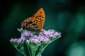 colorful butterfly on summer flower