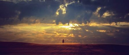 Landscape of lonely tree in the field