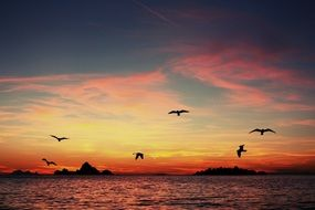 Beautiful sunset in the evening sky with the birds in Croatia