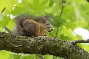 squirrel in wildlife