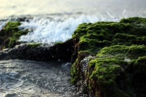 dark green moss on stones by the ocean