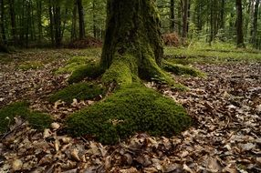 moss and fallen leaves on forest floor