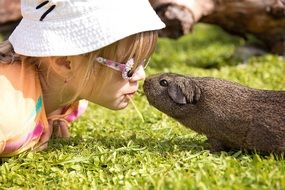 little girl in glasses and cute guinea pig