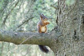wild squirrel on he tree