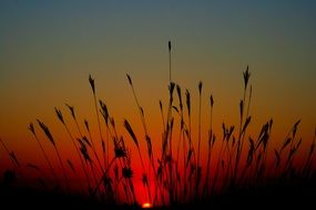 wild grass at sunset
