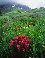 gorgeous landscape with colorful wildflowers, usa, colorado, ouray