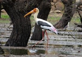 lonely stork between trees